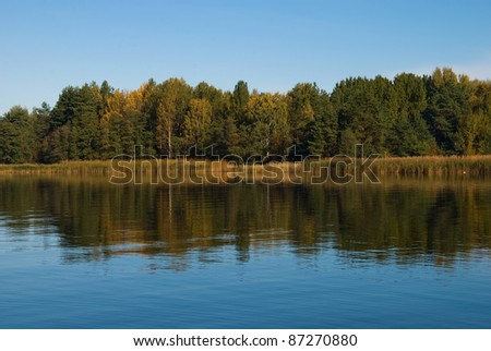beautiful forest at the gulf coast. Gulf of Finland. - stock photo