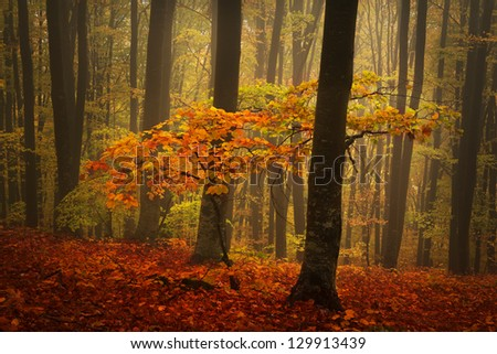 Beautiful forest during a foggy day - stock photo