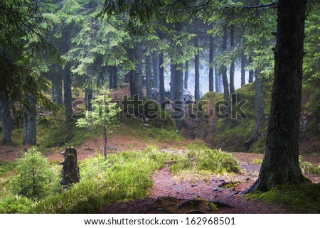 Beautiful forest in a foggy day during autumn - stock photo