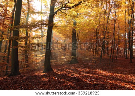 Beautiful forest in autumn, Poland - stock photo