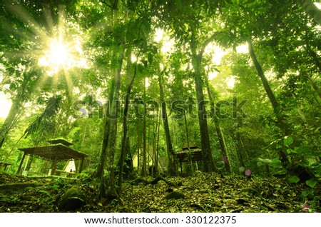 beautiful forest in the morning with sun flare - stock photo