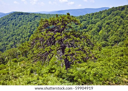 Beautiful forest in the popular Blue Ridge  Mountains in Shenandoah national park - stock photo