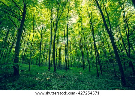 Beautiful forest in the spring with green trees