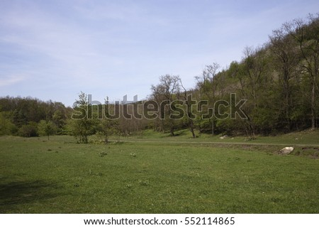 Beautiful forest landscape. There are a field and trees on a slope.