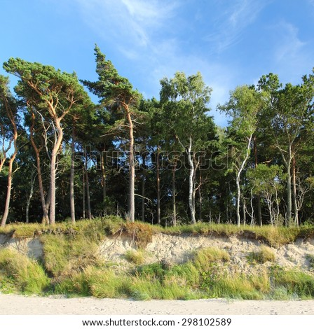 Beautiful forest on the cliff edge. Blue sky and white clouds. - stock photo