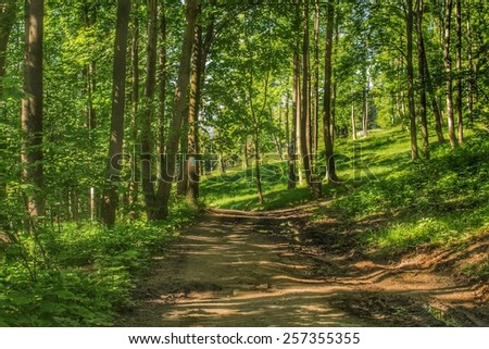 Beautiful forest road in summer - stock photo