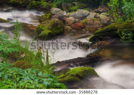 beautiful forest stream