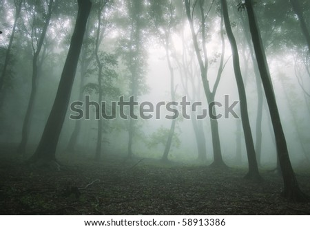 beautiful forest with fog between trees - stock photo