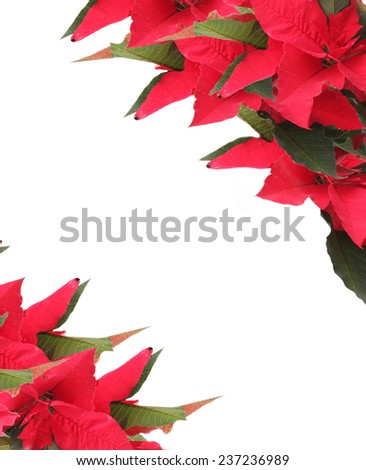 Beautiful frame with poinsettia isolated on white - stock photo