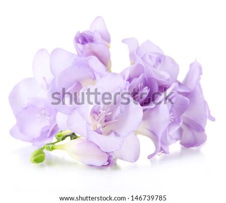 Beautiful freesia, isolated on white - stock photo
