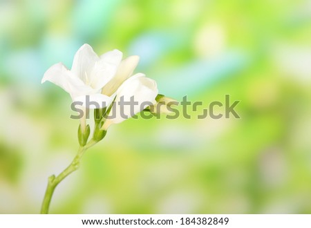 Beautiful freesias on green nature background