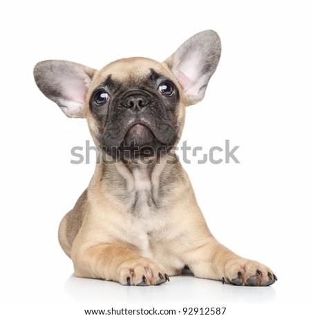 Beautiful French bulldog puppy lies on white background - stock photo