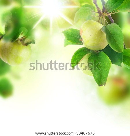 Beautiful Fresh Apples in orchard - stock photo