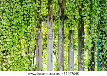 Beautiful fresh green leaves and small trees on old wood wall background.