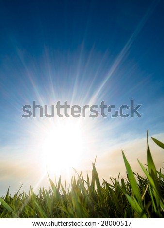 beautiful fresh green wheat  against sun at spring with blue sky and some clouds - stock photo