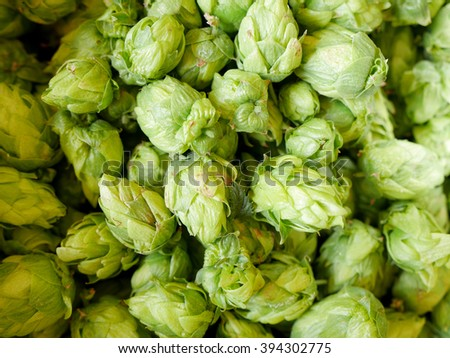 Beautiful fresh hops cone. Located on the whole background.