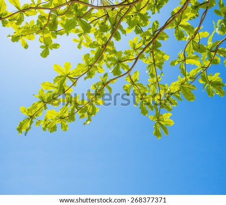 beautiful fresh leaves on blue sky background