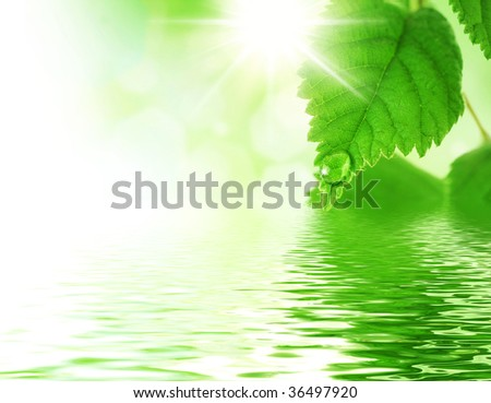 Beautiful Fresh Leaves with Water drop - stock photo
