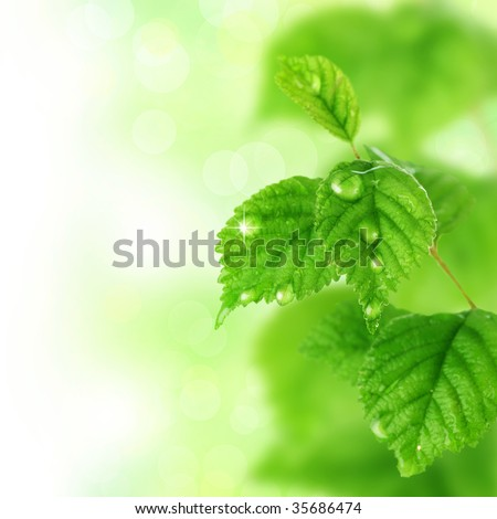 Beautiful Fresh Leaves with Water drops - stock photo