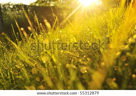 beautiful fresh morning with sun rays and dramatic light - stock photo