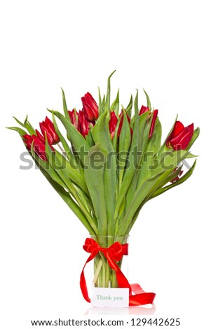 beautiful fresh red tulips on a white background