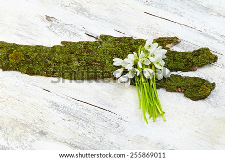 Beautiful fresh snowdrops on wooden background - stock photo