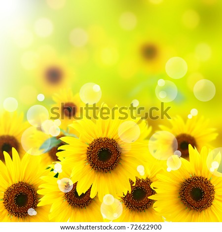 Beautiful fresh sunflower and light reflect for background - stock photo