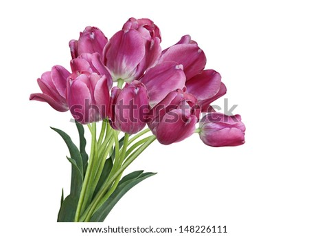 Beautiful fresh tulip flowers bouquet isolated on white background