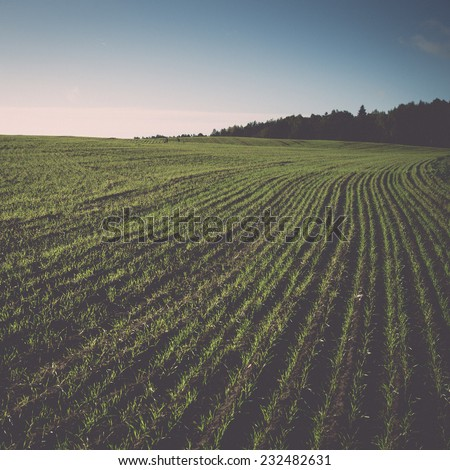 beautiful freshly cultivated green crop field in the countryside. Vintage photography effect. - stock photo