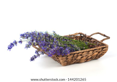 Beautiful, Freshly Picked Lavender in a Country Style, Woven Brown Basket on White Background - stock photo