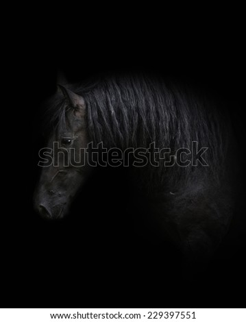 beautiful friesian horse stallion in autumn nature