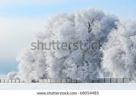 Beautiful frost covered trees in winter - stock photo