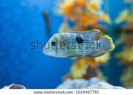 Beautiful funny fish on the background of aquatic plants