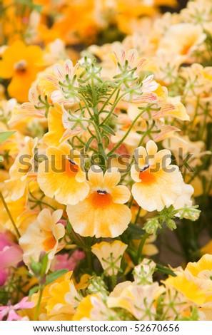 beautiful garden flower Nemesia strumosa - stock photo