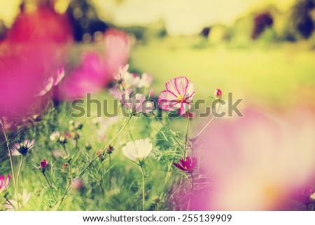 beautiful garden flowers - stock photo