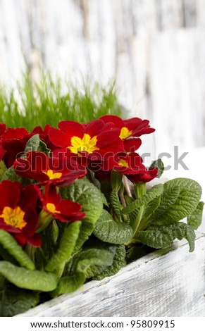 beautiful garden flowers in spring - stock photo