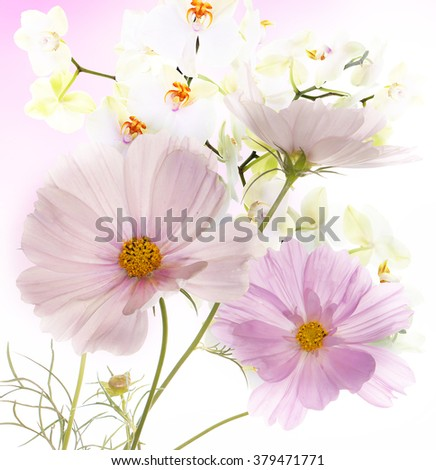 Beautiful garden flowers on abstract  light pink background - stock photo