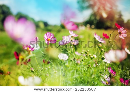 beautiful garden flowers/ summer flower background - stock photo