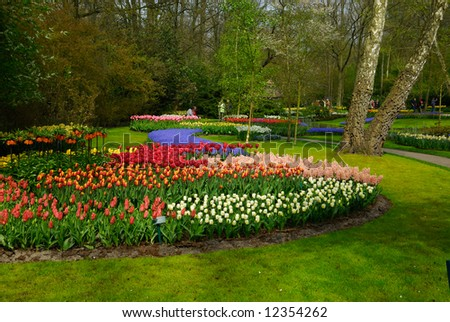beautiful garden of colorful flowers in spring (keukenhof, The Netherlands)