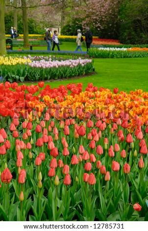 beautiful garden of colorful flowers in spring (keukenhof, The Netherlands) - stock photo