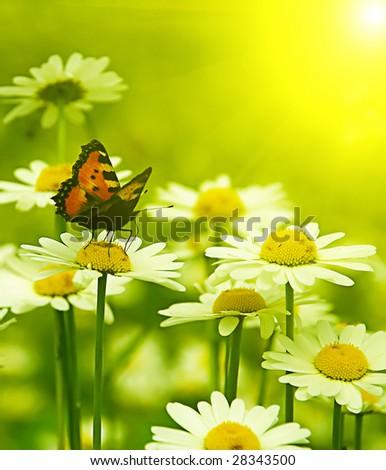 beautiful garden scene - stock photo