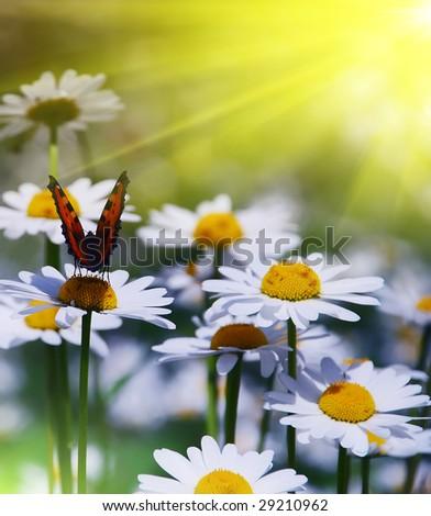 beautiful garden scene sunny day - stock photo