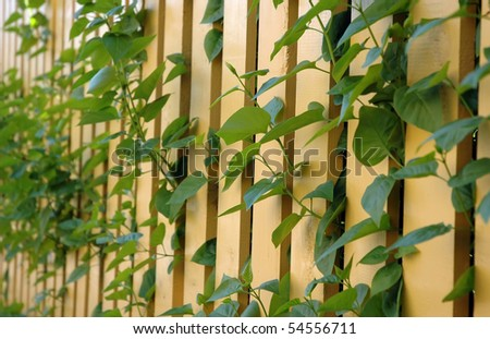 beautiful garden setting with plants and yellow picket fence - stock photo