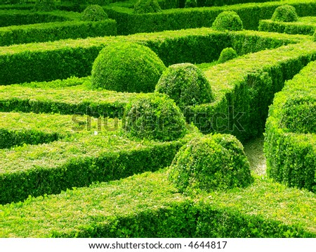 Beautiful garden with hedges - stock photo