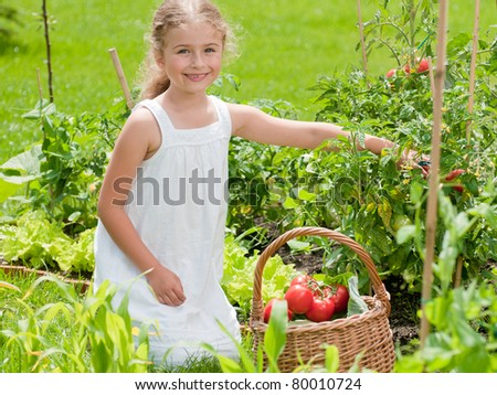 Beautiful gardener - little girl picking organic tomatoes