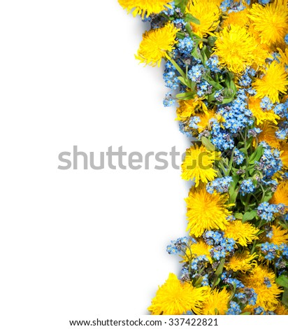 Beautiful garland of  springtime wildflower: cute pale cobalt Boraginaceae and vivid ocher blowballs with green leaves isolated on white backdrop with clipping mask. View close-up with space for text - stock photo