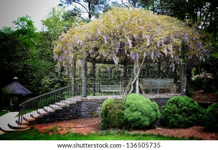 Beautiful gazebo overgrown with wisteria - stock photo
