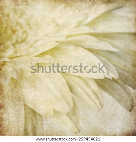 Beautiful gerber flower - stock photo