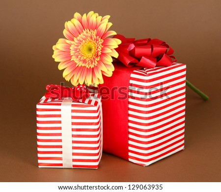 Beautiful Gerber flower with gifts on brown background - stock photo
