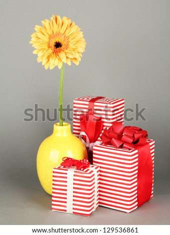 Beautiful Gerber flower with gifts on grey background - stock photo